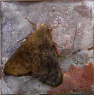 «Butterfly» 2007