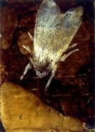 «Butterfly» 2001